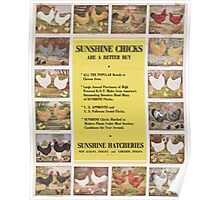 United States Department of Agriculture Poster 0220 Sunshine Chicks Poster