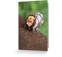 What is your name my bristly friend? Greeting Card