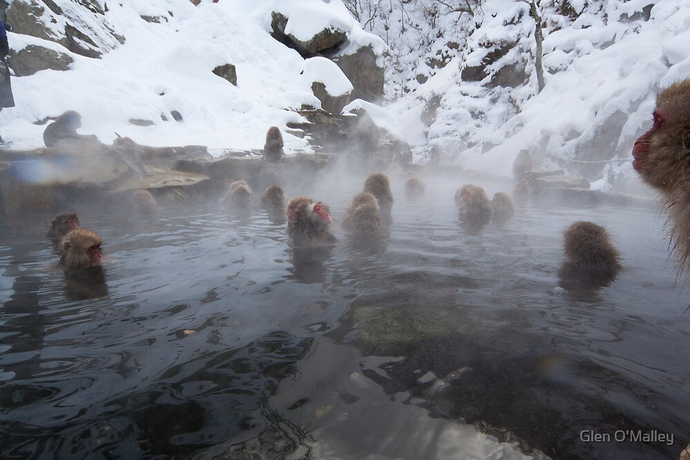 Snow monkeys, Jigokudani by Glen O'Malley