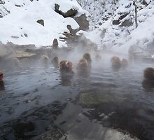 Snow monkeys, Jigokudani by Glen O'Malley