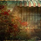 Old House by Rozalia Toth