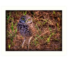The Burrowing Owl - little fellow Art Print