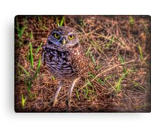 The Burrowing Owl - little fellow Metal Print