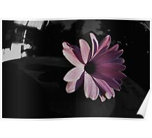 Dark Beauty on a Bin (please view LARGE) Poster
