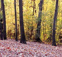 In Golden Woods (card) by MarjorieB