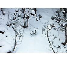 Snow scene, Jigokudani Photographic Print