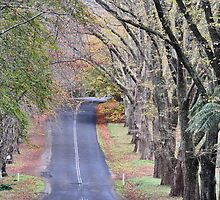 The Avenue - Mt Wilson NSW Australia by Bev Woodman