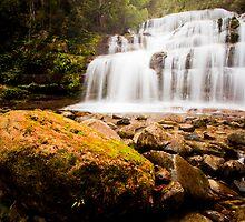 Liffey Falls, Liffey, Tasmania by Matthew Stewart