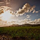 tumbulgum cane fields by Tim Richardson