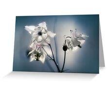 White columbine flowers Greeting Card