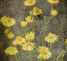 Yellow Paper Daisies by julie anne  grattan