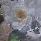 White Iceberg by julie anne  grattan