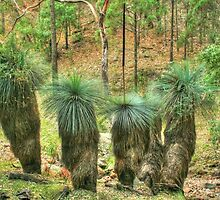Grass Trees at Warrumbungle National Park by Michael Matthews