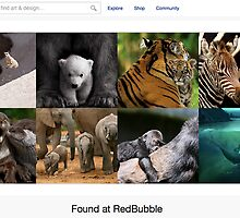 Wildlife-Moms with Babies - 14 November 2010 by The RedBubble Homepage
