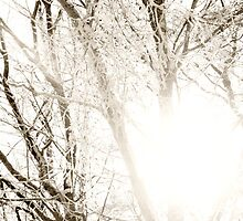 Sun shining through frosty tree branches by intensivelight