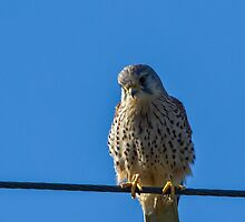 Bird on a wire by JanSmithPics
