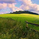 Country Life by Kym Howard