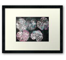 Novembers Garden 2 - Monoprint Framed Print