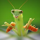 Mantis eating worm by nantid