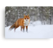 Snow nose Canvas Print