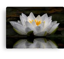 WaterLily Reflection, Canvas Print
