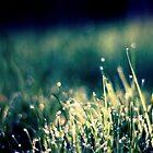 Little Wet by JurrPhotography