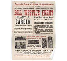 United States Department of Agriculture Poster 0015 Boll Weevil's Enemy Poster