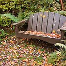 Autumn Bench  by DIANE  FIFIELD