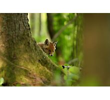 Behind the tree - red fox kit Photographic Print