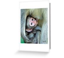 Vervet Monkey Greeting Card