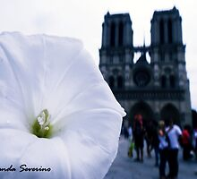 notre dame de paris by lovenaturenow