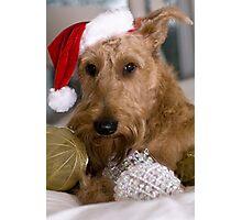 Irish Terrier Christmas Photographic Print
