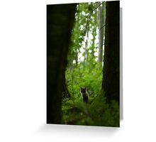 Lonely red fox puppy in forest Greeting Card