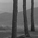 Blue Ridge Mountains - Virginia by Frank Romeo
