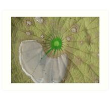 Lily pad of water Art Print
