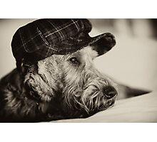 Póg ponders life Photographic Print