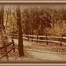 Split Rail by bicyclegirl