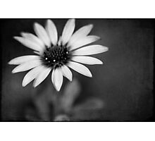 simply daisy Photographic Print
