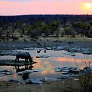 Rhino Sunset by Antionette
