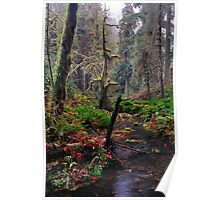 Fall in the Rainforest - Olympic N. P. Poster