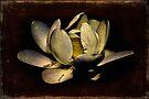 Dark Sacred Lotus by Chris Lord