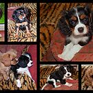 Puppy Collage by AnnDixon