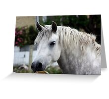 Grey Connemara Pony looking over a stone wall Greeting Card