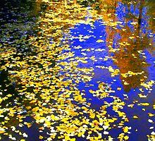 """""""Floating Leaves"""" by Lynn Bawden"""