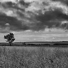 Lone Tree by BlaizerB