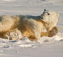 Hello. Care for a roll in the snow? by Owed to Nature