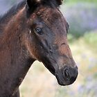 Black Beauty's Filly Foal by julie anne  grattan