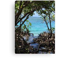 Caribbean mangroves Canvas Print