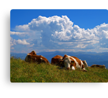 Cows on a Mountain top. Canvas Print