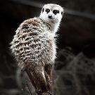 Animals VI by James McKenzie